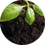 почвоведческая  экспертиза