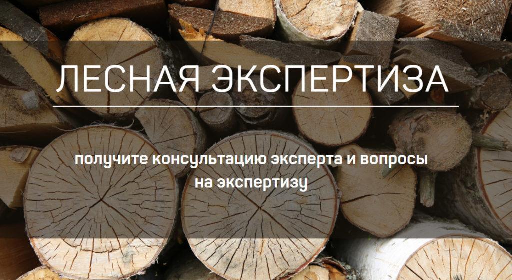 lesnaya_expertiza